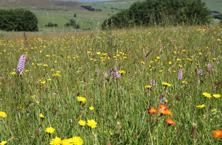 Former YHA Bretton Hostel is surrounded by beautiful meadows